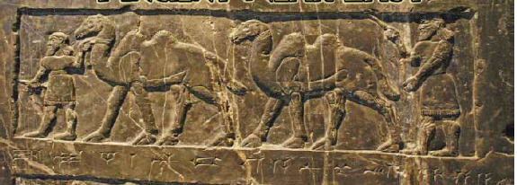 The Domestication Of The Camel In The Ancient Near East